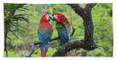 Red And Green Macaws Courting Brazil Beach Towel