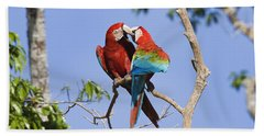 Red And Green Macaws Courting Tambopata Beach Towel