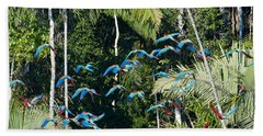 Red-and-green Macaws In Flight Beach Towel