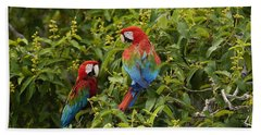 Red And Green Macaws Pair Brazil Beach Towel
