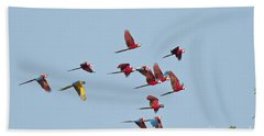 Red-and-green Macaws Beach Towel