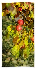 Red Apples On The Branchh Beach Towel