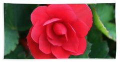 Beach Towel featuring the photograph Red Begonia by Sergey Lukashin