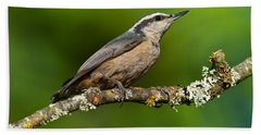 Red Breasted Nuthatch In A Tree Beach Sheet