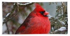 Red Cardinal In Winter Beach Towel by Dan Sproul