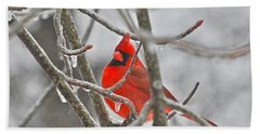 Red Cardinal Northern Bird Beach Towel by Peggy Franz