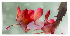 Red Christmas Cactus Bloom Beach Towel by Patti Deters