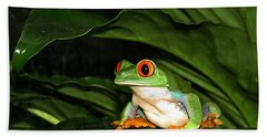 Red Eyed Green Tree Frog Beach Towel by MTBobbins Photography