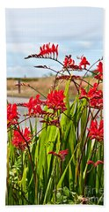 Red Flowers Crocosmia Lucifer Montbretia Plant Art Prints Beach Towel