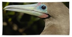 Red-footed Booby Close Up Galapagos Beach Sheet by Pete Oxford