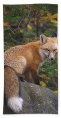 Beach Towel featuring the photograph Red Fox by James Peterson