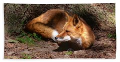 Red Fox Resting Beach Sheet