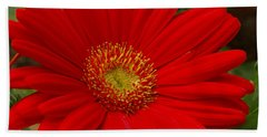 Red Gerbera Daisy Beach Towel