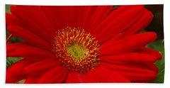 Red Gerbera Daisy Beach Sheet by James C Thomas