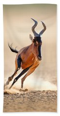 Red Hartebeest Running Beach Towel