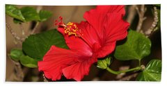 Red Hibiscus Flower Beach Sheet by Cynthia Guinn