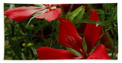 Red Hibiscus Blooms Beach Towel