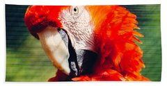 Red Macaw Closeup Beach Towel by Pati Photography