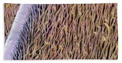 Red Palm Weevil Antenna Sem 1822x Beach Towel by Albert Lleal