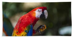 Red Parrot  Beach Towel by Garry Gay
