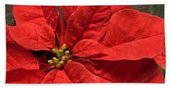Red Poinsettia Plant For Christmas Beach Towel by Jane McIlroy