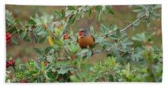 Red Robin Eating Berries Beach Towel