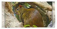 Red-rumped Agouti Beach Towel