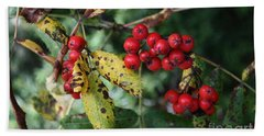 Beach Towel featuring the photograph Red Summer Berries - Whistler by Amanda Holmes Tzafrir