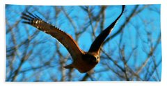 Beach Towel featuring the photograph Red Tail Hawk In Flight by Peggy Franz
