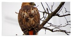 Red Tail Hawk In Winter Beach Towel