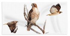 Red Tail Hawk Series Beach Sheet