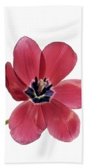 Red Transparent Tulip Beach Sheet