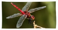Red-veined Darter  - My Joystick Beach Towel by Ramabhadran Thirupattur