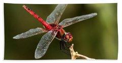 Red-veined Darter  - My Joystick Beach Towel