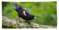 Red-winged Blackbird Beach Sheet by Christina Rollo