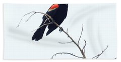 Red-winged Blackbird Beach Sheet by Paul  Wilford