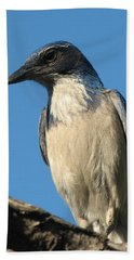Regal Western Scrub Jay Beach Towel