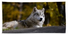 Beach Towel featuring the photograph Resting Arctic Wolf On Rocks by Wolves Only