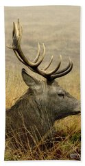 Resting Stag Beach Towel