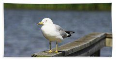 Ring-billed Gull Beach Towel by Alyce Taylor