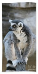 Beach Sheet featuring the photograph Ring-tailed Lemur #3 by Judy Whitton