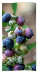 Ripening Blueberries Beach Sheet by John Haldane