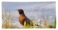 Robin Viewing Surroundings Beach Towel by John M Bailey