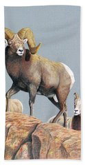 Rocky Mountain Ram Ewe And Lamb Beach Towel
