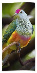 Rose-crowned Fruit-dove Australia Beach Towel