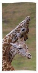 Rothschild Giraffe Calves Necking Beach Towel