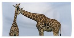 Rothschild Giraffe Pair Nuzzling Beach Towel
