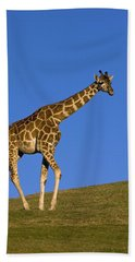 Rothschild Giraffe  Beach Towel