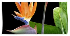 Royal Beauty II - Bird Of Paradise Beach Towel