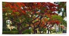 Royal Poinciana Trees In Blooming In South Florida Beach Towel